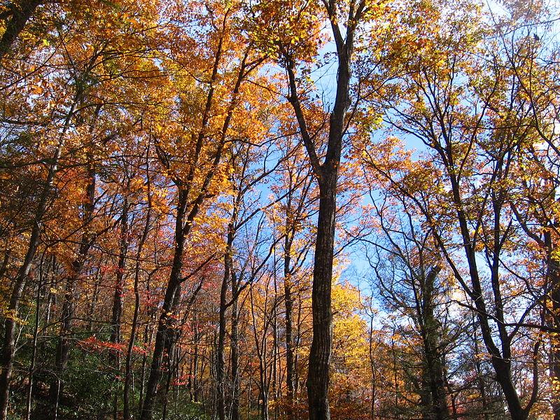 800px-Mount_Mitchell_Fall_Foliage