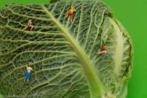 Jodie Beardmore - A set of hand mounted prints depicting my photography series 'The Land of Food' which shows the adventures of miniature people exploring delectable locations in a multitude of ways. A set of climbers climb up the leaves of a cabbage, a couple sail out onto a sea of spaghetti and a group of nudists take a dip into a grapefruit pool. I am very much interested in seeing normal things in a peculiar way and it was very enjoyable to take something as simple as food and turn it into something entirely different.