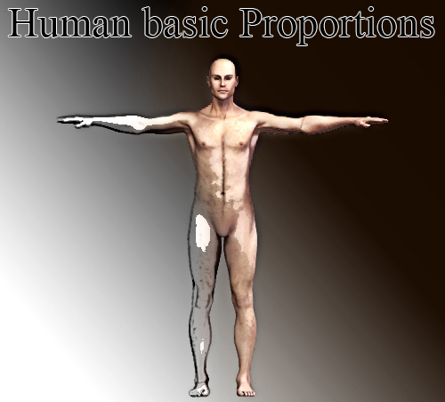 Human body proportions basics: The Canon 9