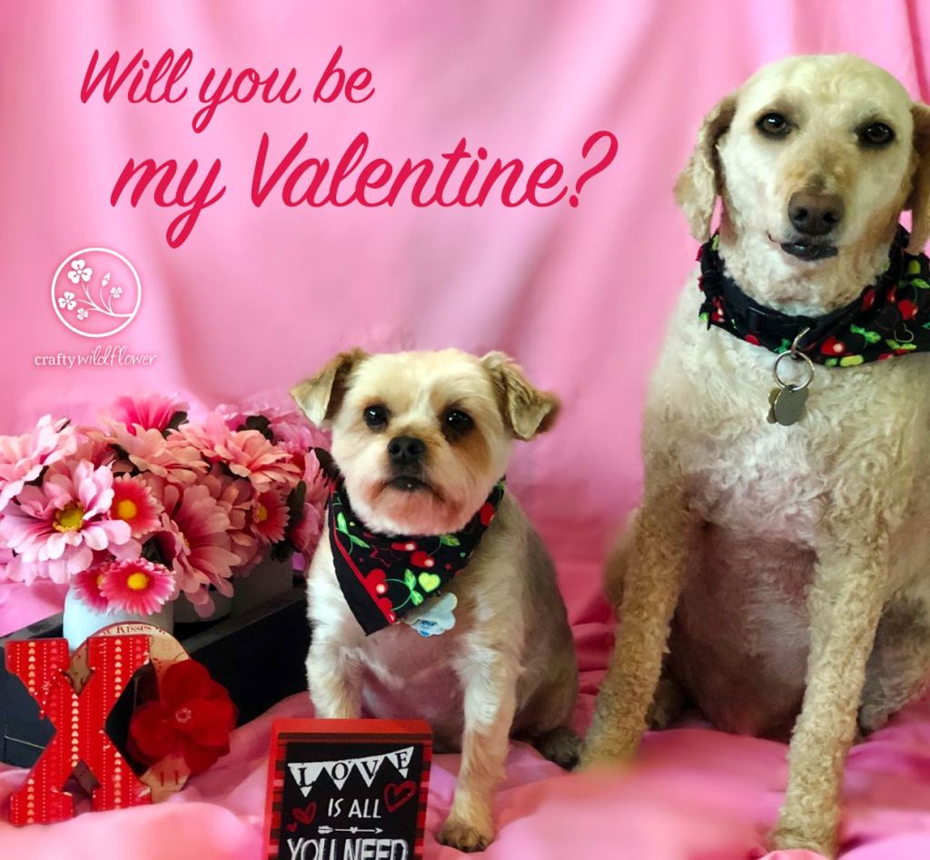 Keeping Our Family & Furry Friends Healthy For Valentines - Dexter & Logan Valentines Day