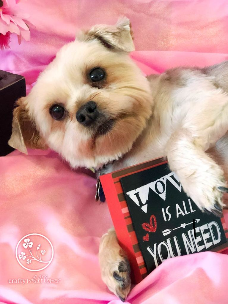 Keeping Our Family & Furry Friends Healthy For Valentines - Dexter Valentines Day