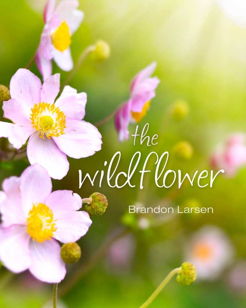 The Wildflower Book at Amazon