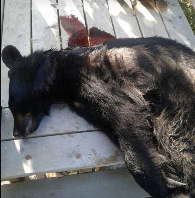dead bear