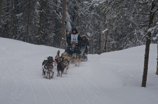 Dallas_Seavey_2012_Iditarod_Champion