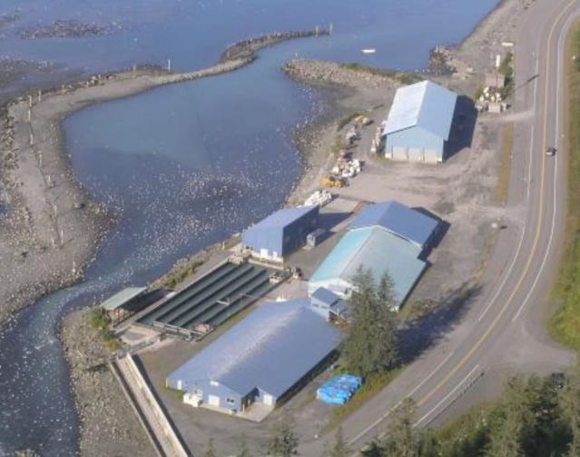 valdez fish farm