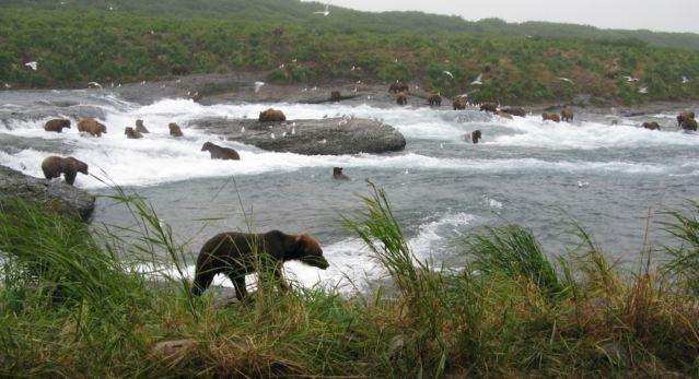 mcneil bears