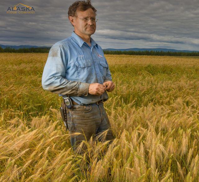 alaska barley