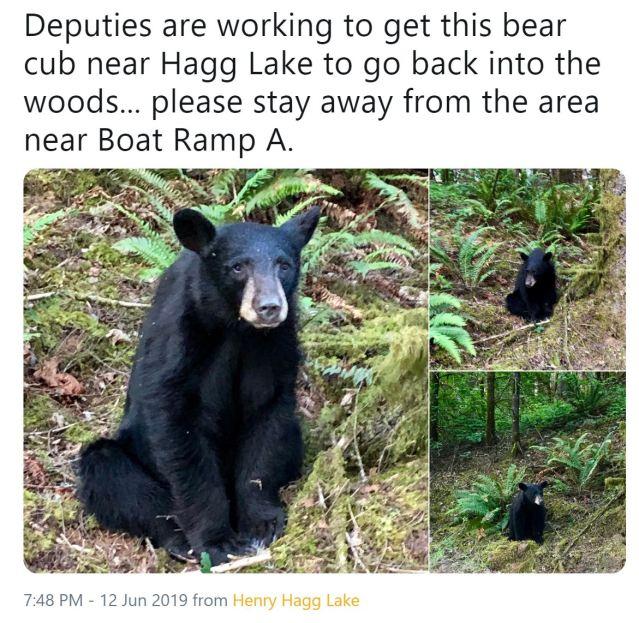 oregon bear