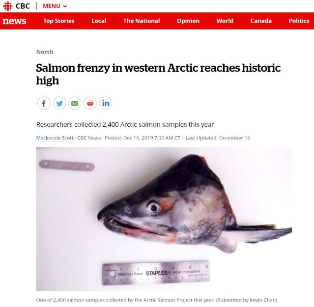 salmon frenzy