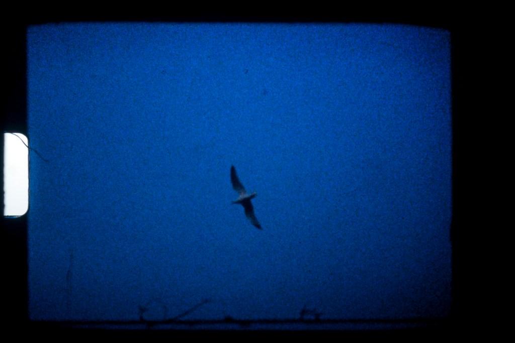 seagull super 8 frame grab