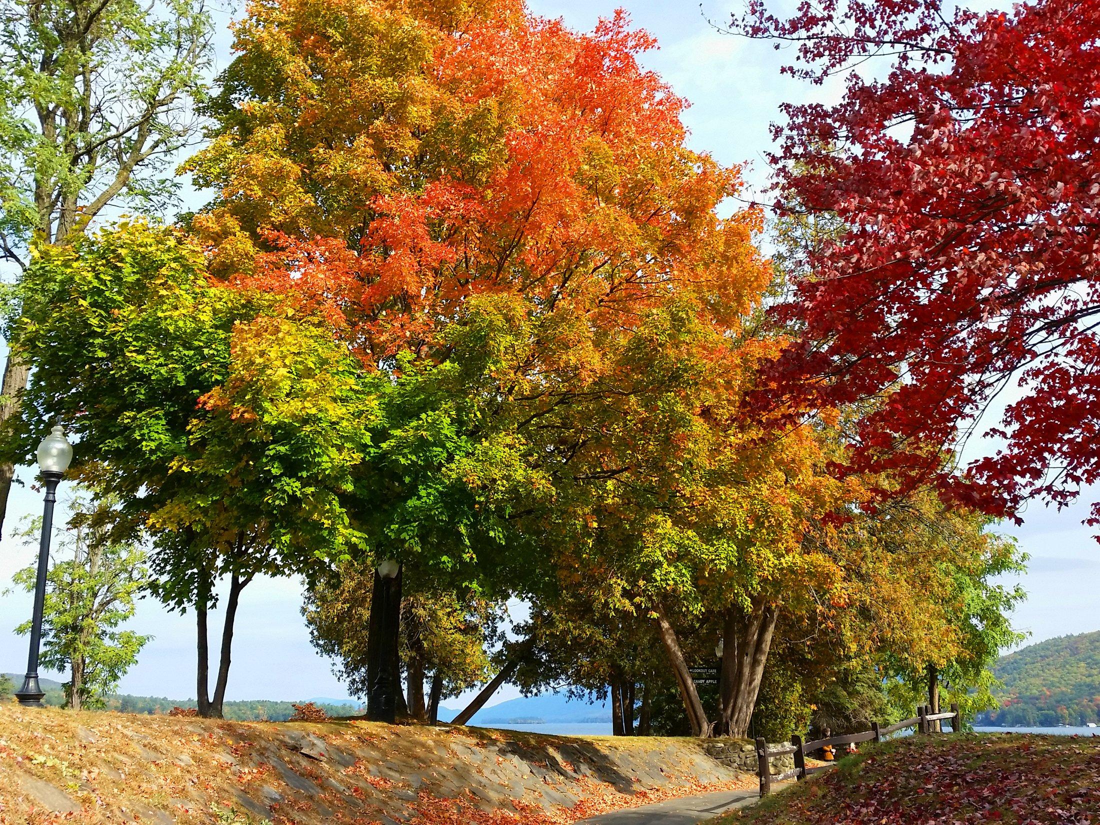 lake-george-autumn-trees