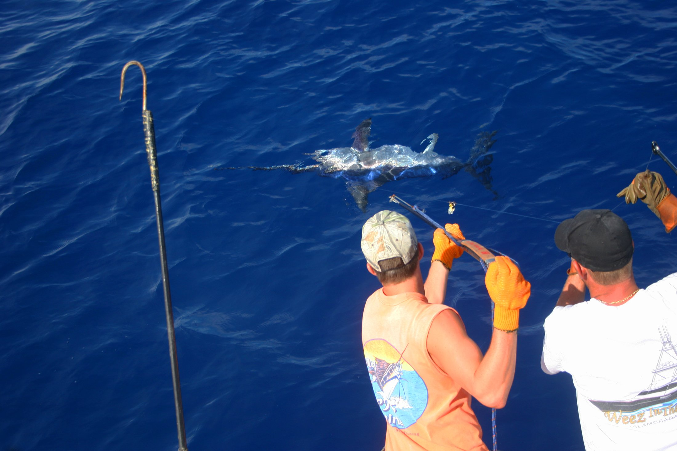 swordfish-gaffe-catch-22