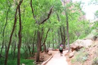 The Riverside Walk is a popular trail in Zion Canyon that leads to the Narrows. (Craig Davis/Craigslegztravels.com)