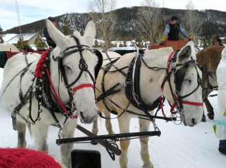 Mules pull the sleighs on the Two Below Zero ride in Frisco, Colo. (Craig Davis/Craigslegztravels.com)