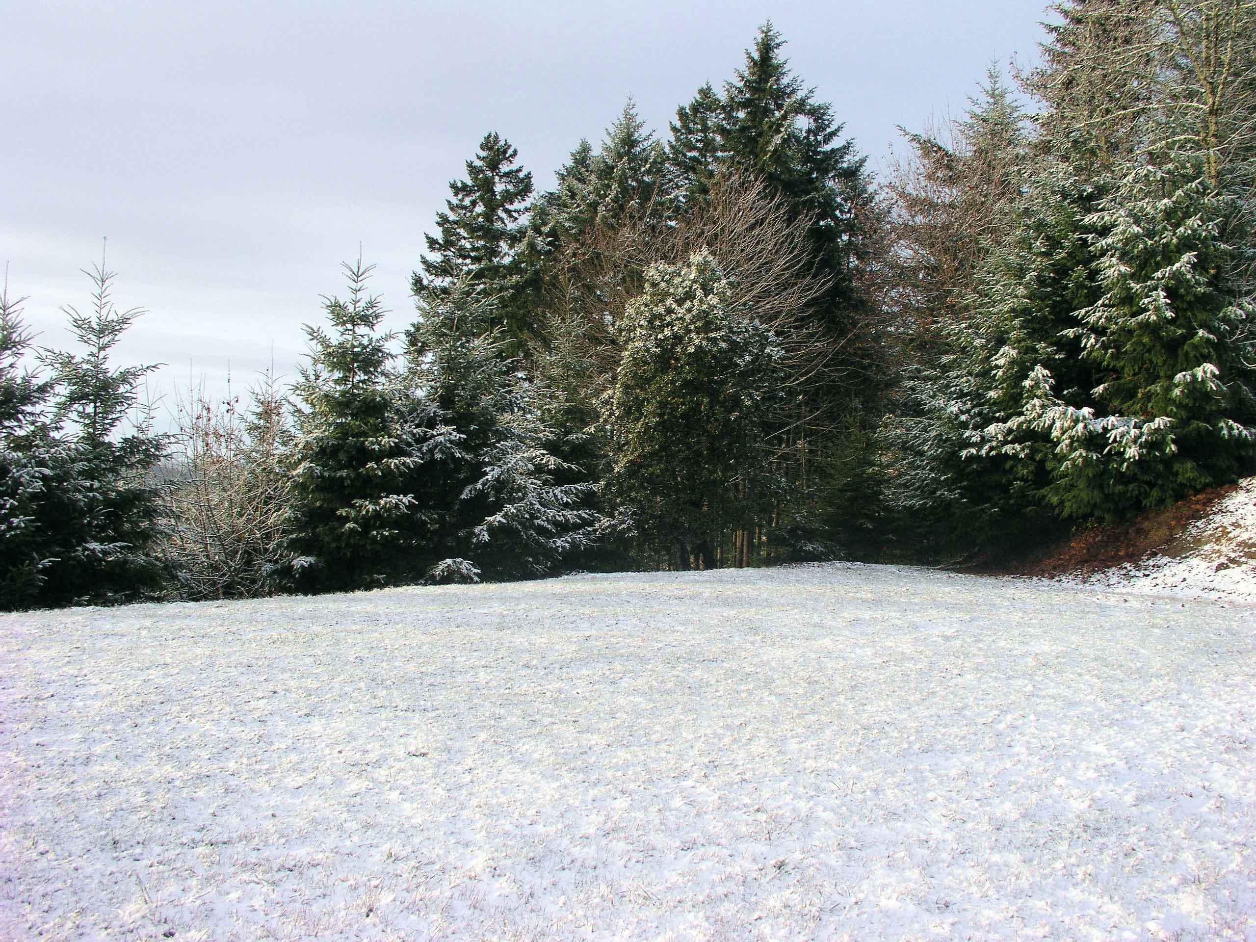 Christmas in Eugene Oregon, 2008