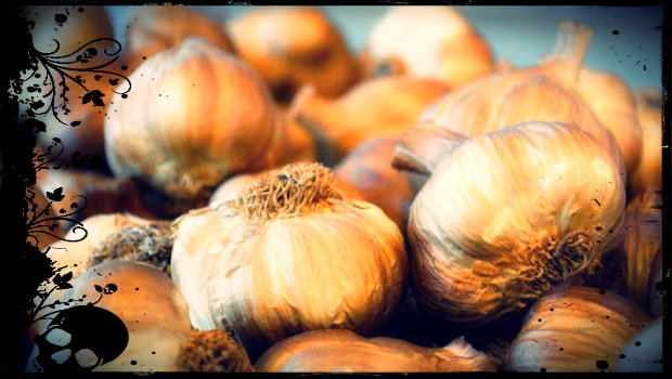 garlic_scull
