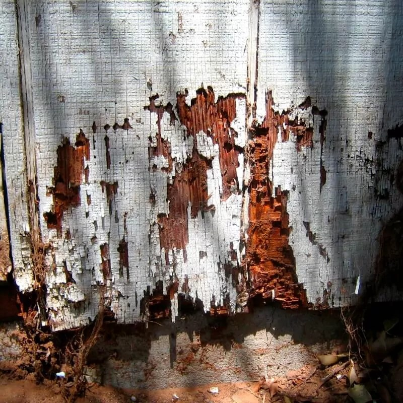 wood-damaged-from-termites-before-treatment