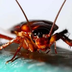 Commercial-and-Industrial-Cockroaches-Spiders-Fleas-and-Tick-Services