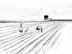 Crane family foraging; irrigation machine