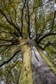 Tree. Woburn Sands. November 2013. By Jaime García.