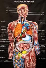ANATOMY – | craniumcommander