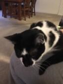 Carla has her lap cat