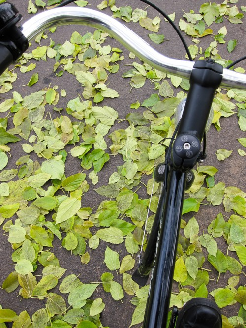 Bike_leaves-1