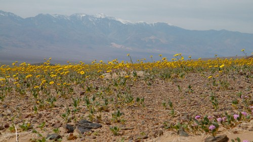 Death_valley-11