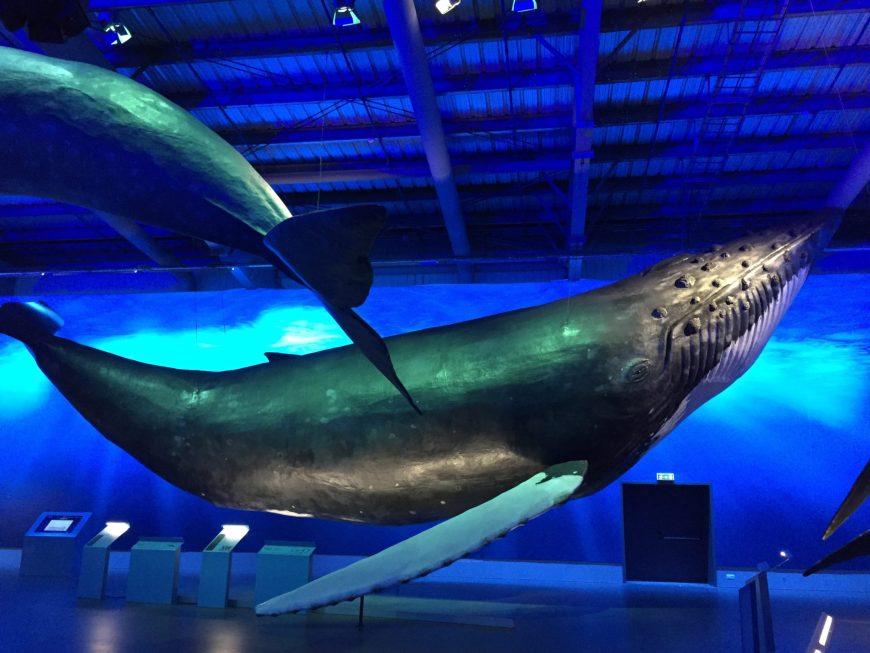 Musée des cétacés - Islande