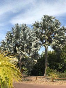 Palmetum Santa Cruz Tenerife