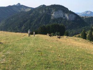 Randonnée Haute Savoie Pic du gay