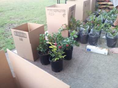 Crape Myrtle Tree Shipping