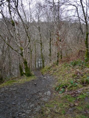 naked forest descents