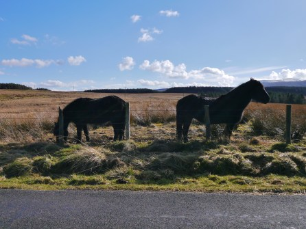 The friendly horses en route to Troutbeck