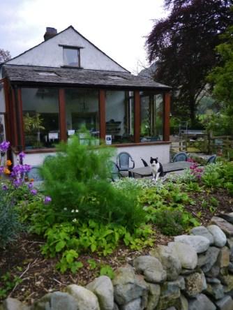 Tea garden and kitty!