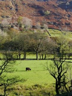 Cumbrian farming landcapes