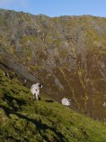 Hill farming at it's finest :)