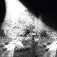 GodSpeed You! Black Emperor -Asunder, Sweet And Other Distress