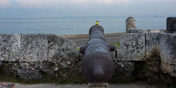 cannon | Crasstalk