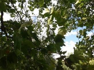2016_Aug 01 Bäume3