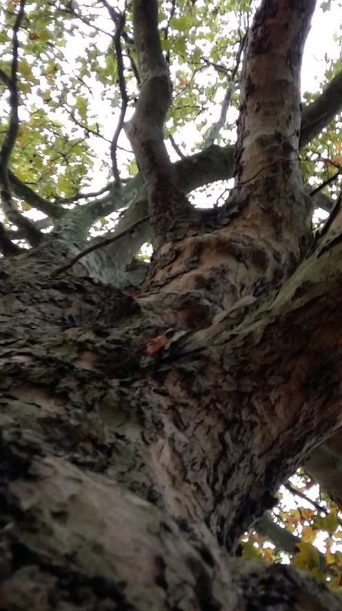 2016_Okt 4 Bäume 4