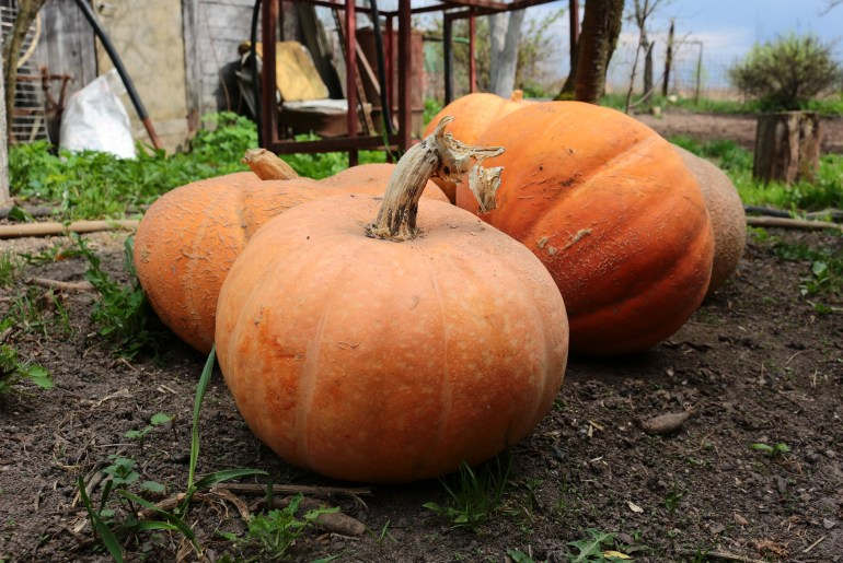 How Americans became so obsessed with pumpkins.jpg