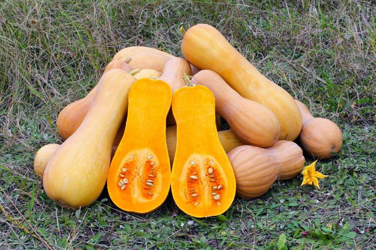 How to pick a perfect butternut squash-2