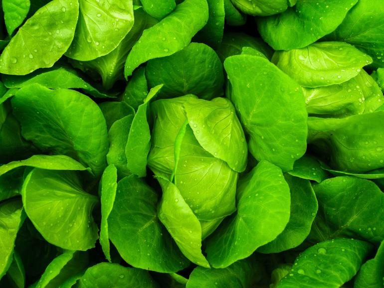 Save money and buy produce in season in March - lettuce