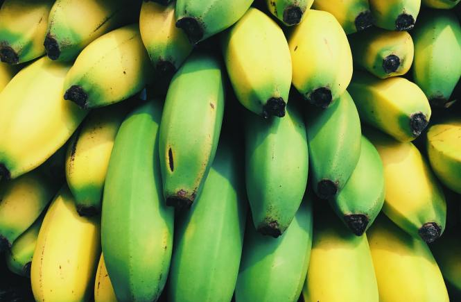 banana-gmo