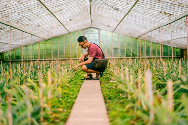 Alex visiting one of the greenhouses at the A. Arruda Pineapple Plantation