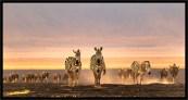 Zebra and Wildebeest_Graham Russell_