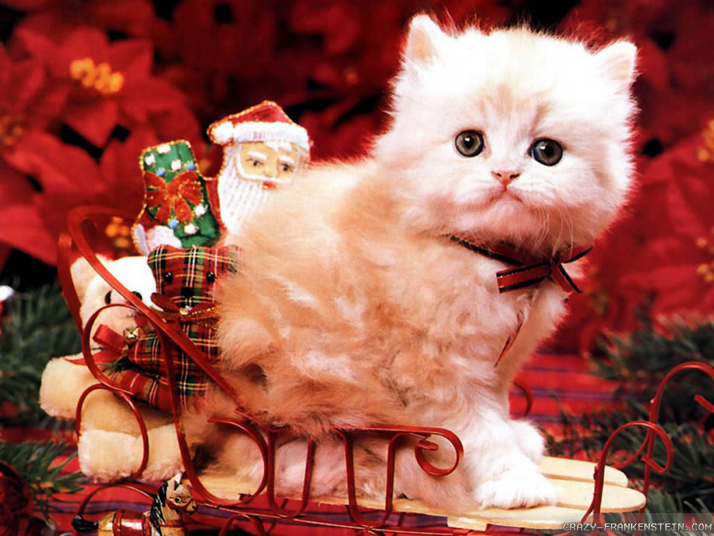 christmas cat wallpapers - crazy frankenstein