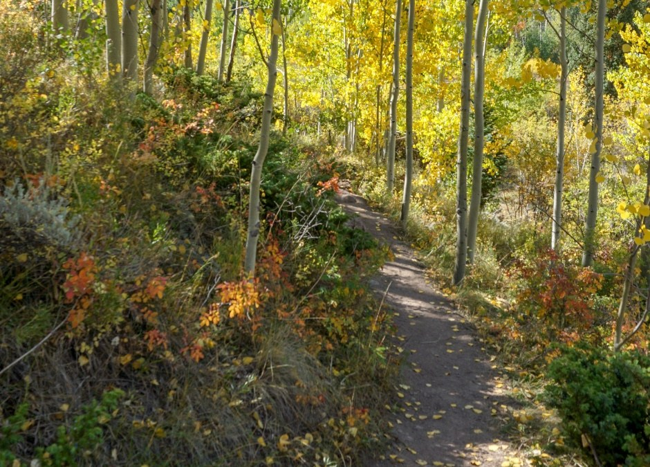 Blissful Fall Hikes in Colorado!