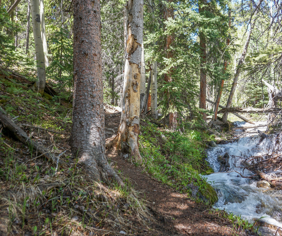 Colorado hikes, where to hike in Buena Vista, Cottonwood Pas, hiking near Cottonwood Pass, Mt. Columbia, 3 Elk Trail, day hiking trails near Salida, where to hike in Colorado, best hikes in Colorado